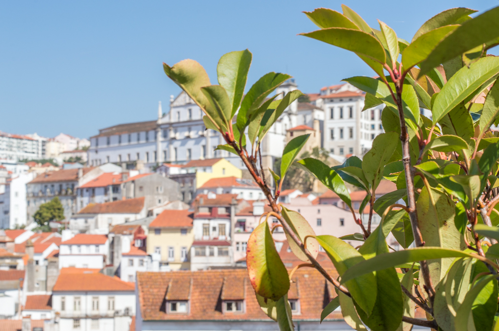 What to Do in Coimbra & Coimbra Points of Interest