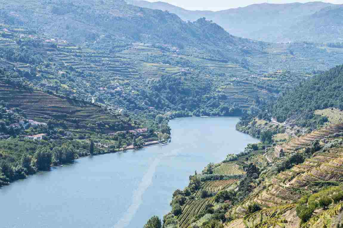 Wine Tasting in the Douro Valley: Day Trip from Porto