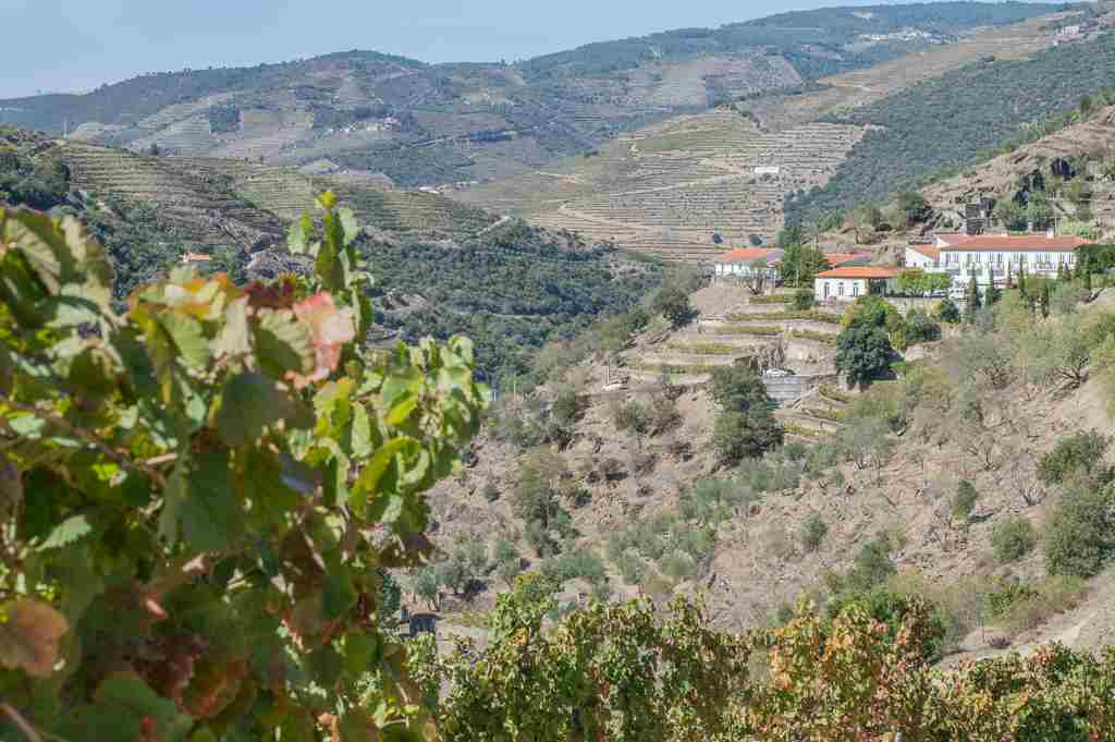 wine tasting in the douro valley quinta do panascal