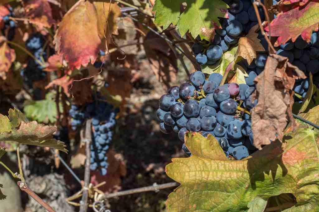 douro valley port wine in portugal