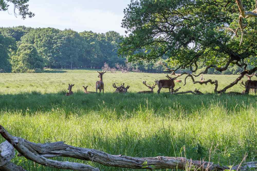 This deer park is located close to Copenhagen.