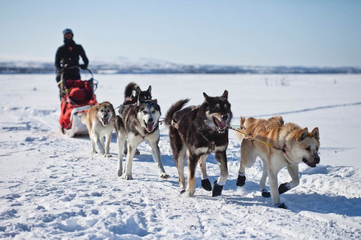 Nothing is more fun than dog sledding in Finland in the winter!