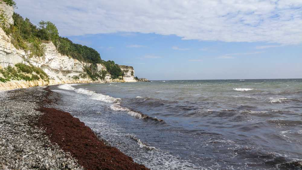 Take a walk along UNESCO-listed Stevns Klint on this day trip from Copenhagen.