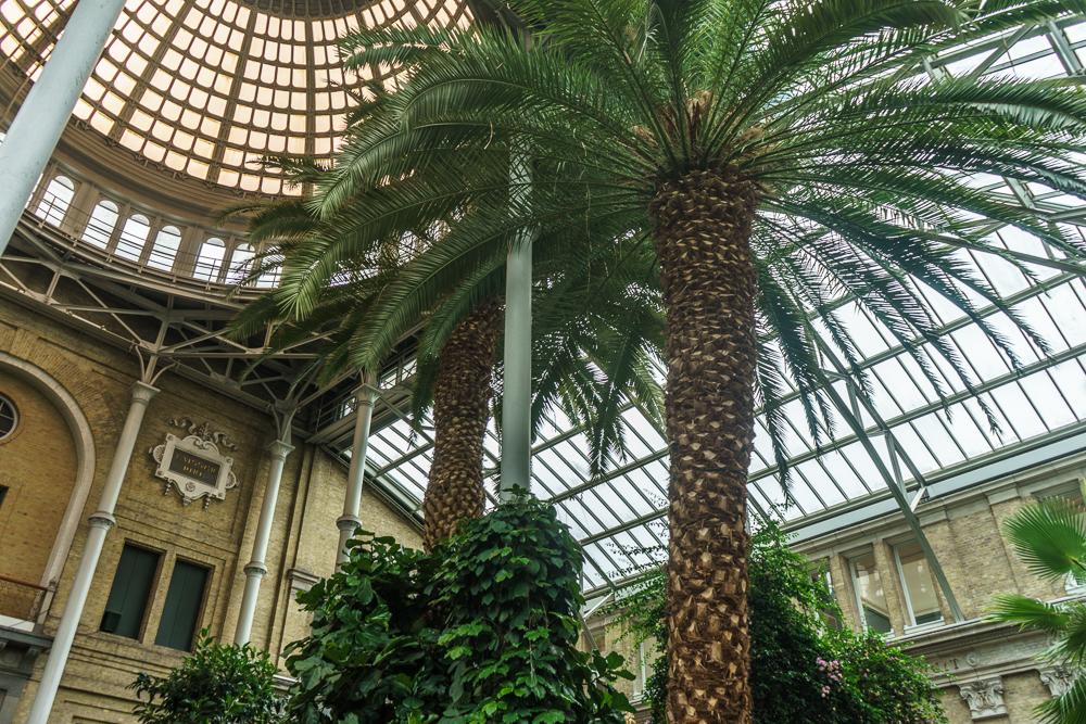 Das Palmenhaus in Ny Carlsberg Glyptotek ist eine der besten Kopenhagen Sehenswürdigkeiten.