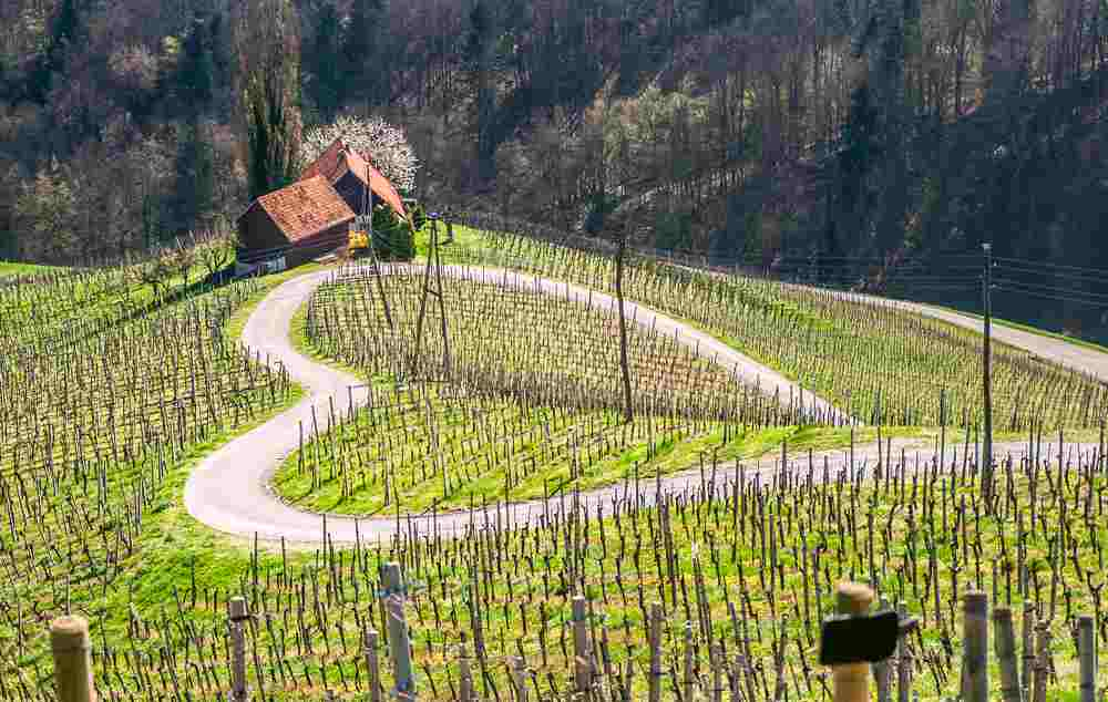 What to do in Maribor: A visit to the stunningly beautiful heart-shaped wine road around Maribor is one of the best places to visit.