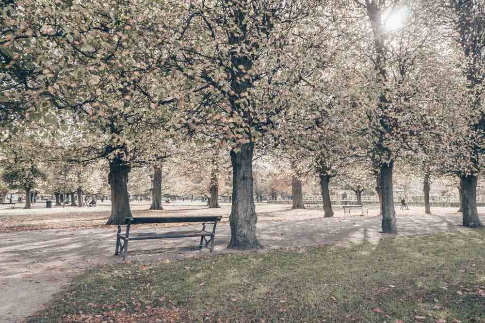 Copenhagen in 2 Days: The beautiful King's Garden in autumn.