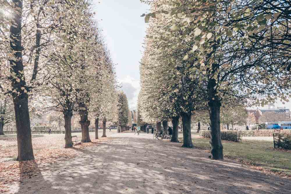 Things to see in Copenhagen: Tree-lined path of the King's Garden in autumn