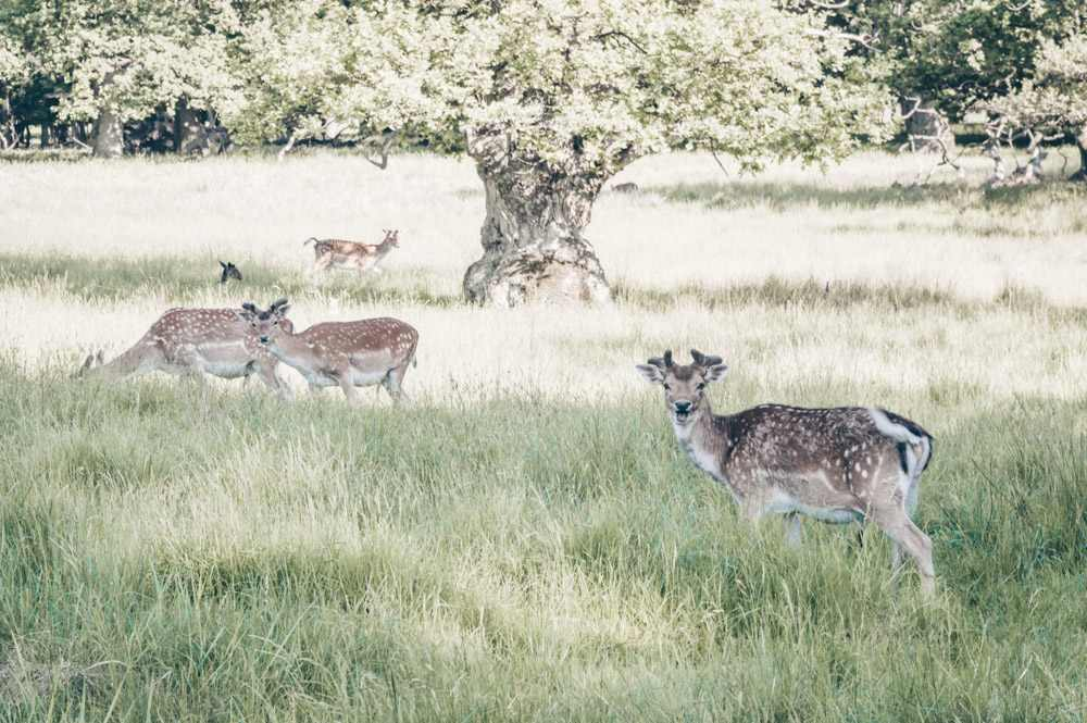 Day Trips from Copenhagen: Deer at the deer park in Jægersborg Dyrehave