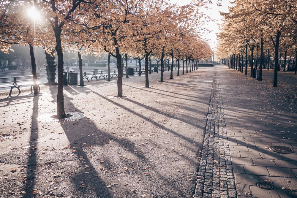 Stockholm Parks: Sunlight falling on trees in Kungsträdgården Park in autumn