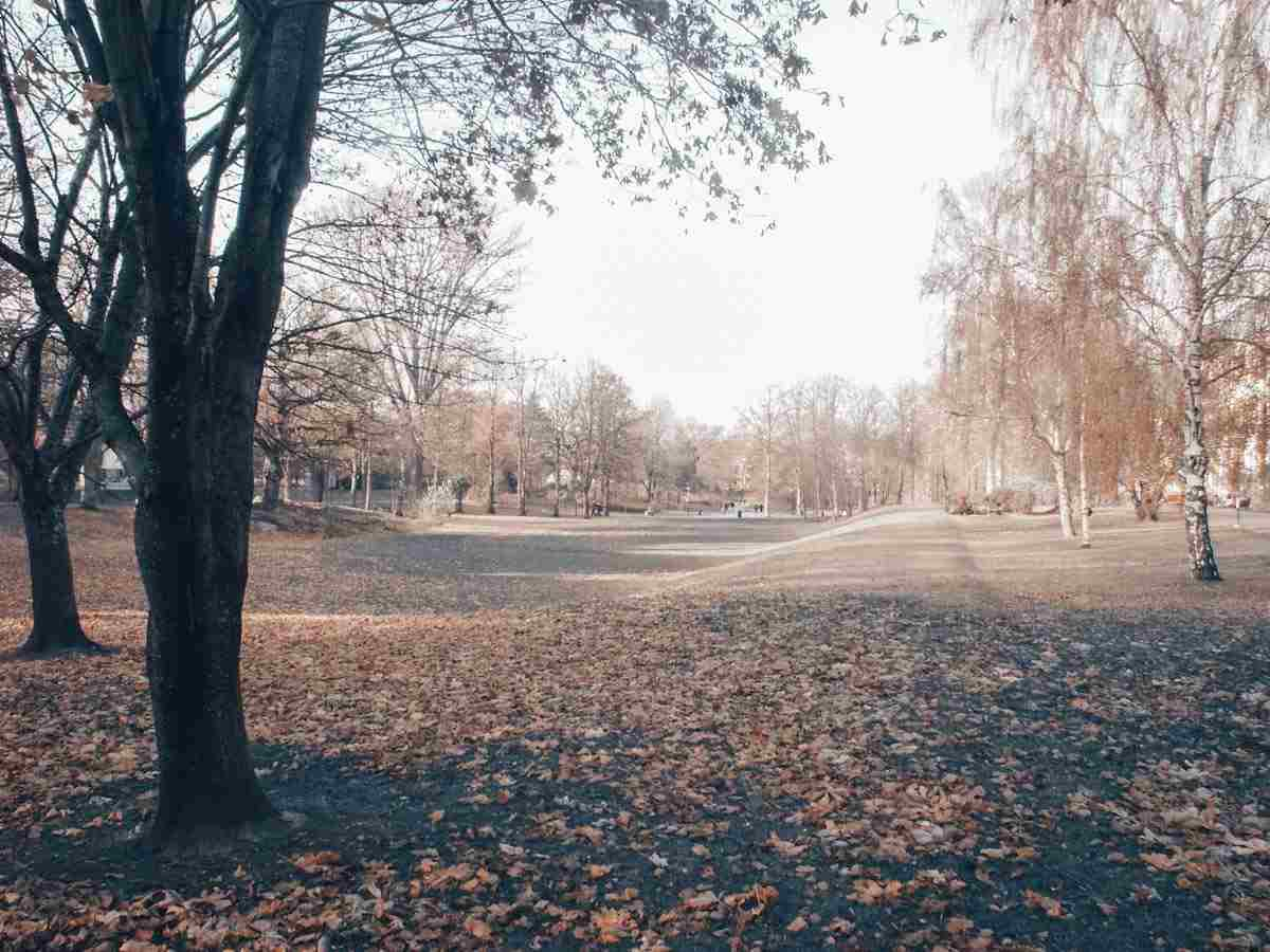 Things to do in Stockholm: Park in Stockholm during autumn. PC:  Alindfors [CC BY 3.0 (https://creativecommons.org/licenses/by/3.0)], via Wikimedia Commons.