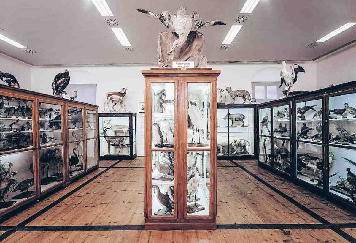 Admont Abbey: Taxidermical collection of the Natural History Museum