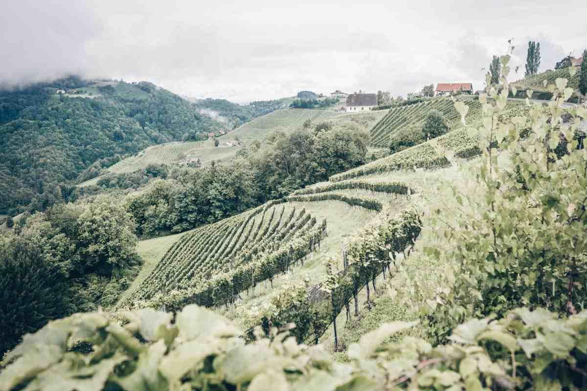 Die Steirische Weinstraße ist eines der besten Ausflugsziele in der Steiermark.