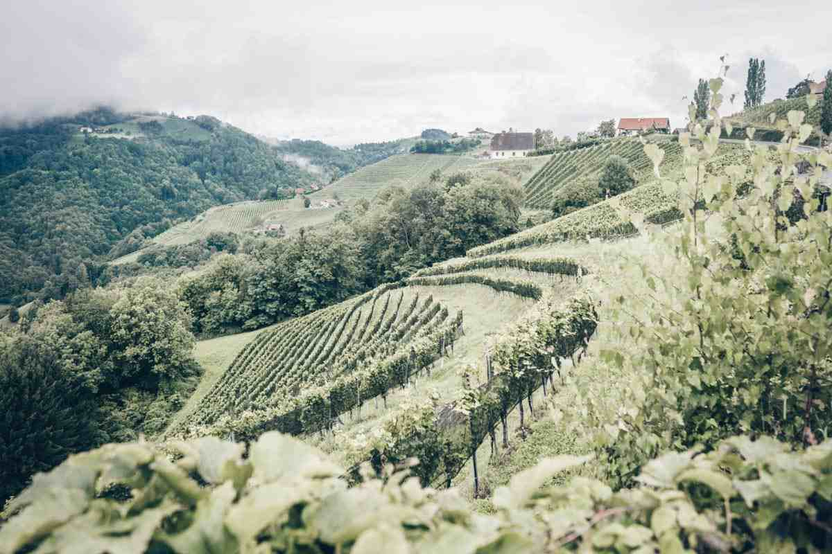 Day Trips From Graz: Picturesque vineyards along the Styrian Wine Roads