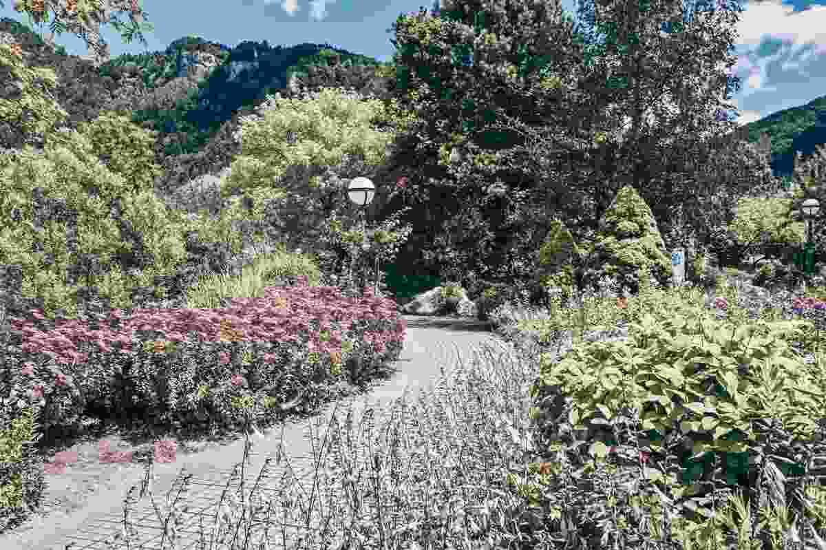 Day Trips from Graz: An assortment of beautiful exotic flowers and trees in Frohnleiten Volkhauspark