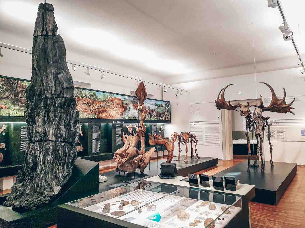 Visit Graz: Skeletons of animals on display at the Natural History Museum