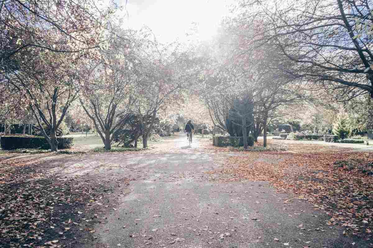 Copenhagen attractions: Person cycling on a path in Assistens Cemetery on a lovely autumn day