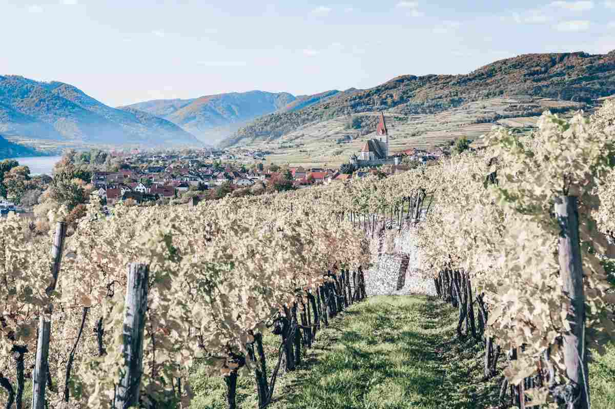 Places to see in Austria: Rich vineyards in the Wachau Valley of Lower Austria
