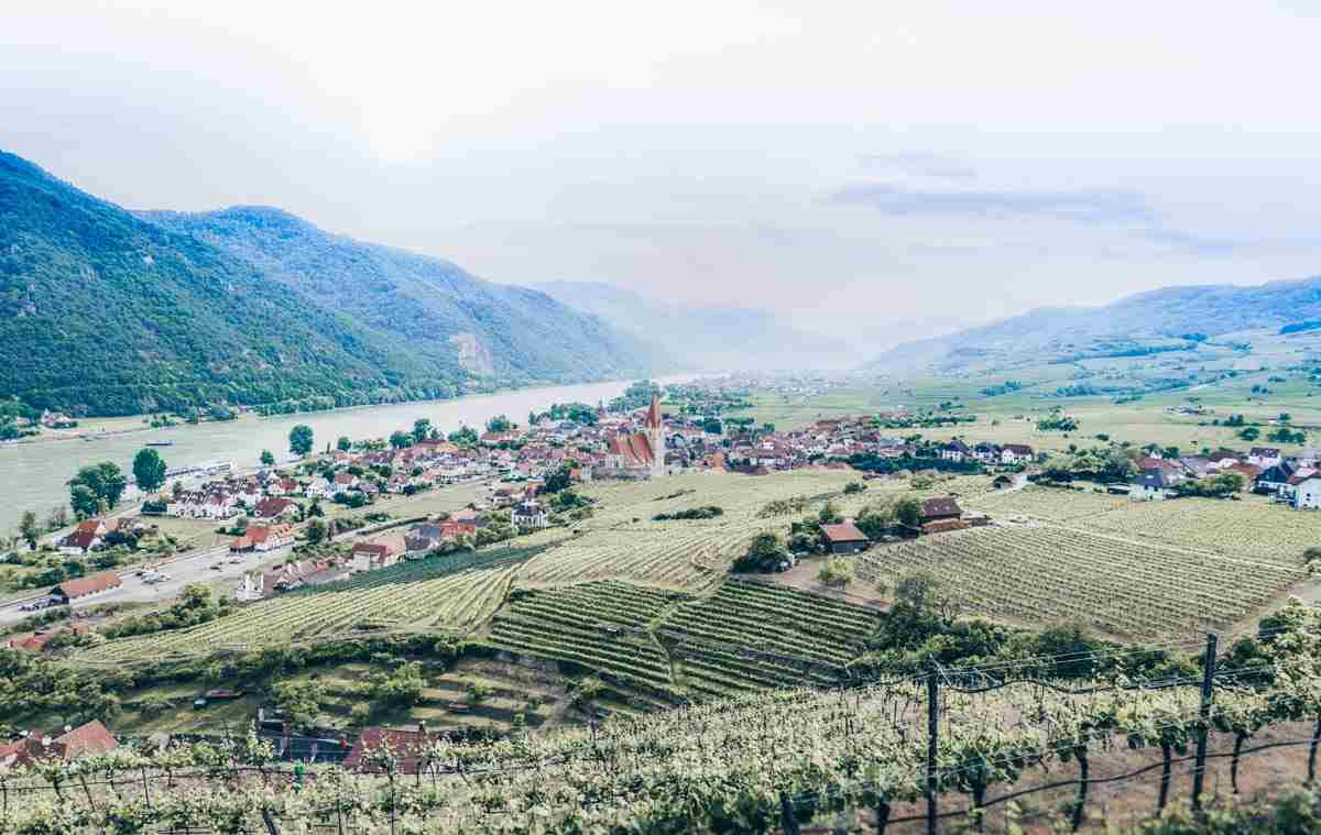 Danube River Valley: Vineyards and rolling hills of Weissenkirchen in Wachau Valley