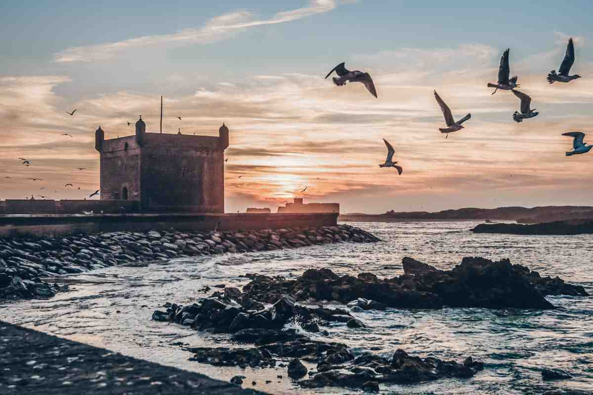 Essaouira: View of Skala du Port at sunset with a flock of seagulls in the air
