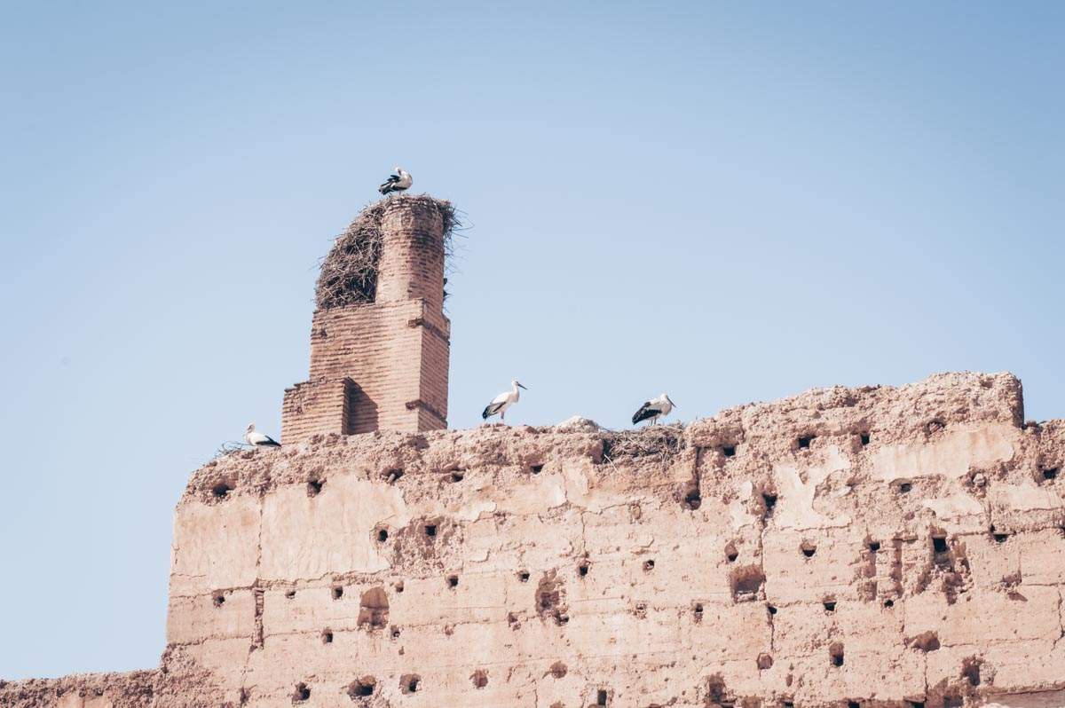 Marrakech: Storks nesting on the crumbling walls of the El Badi Palace