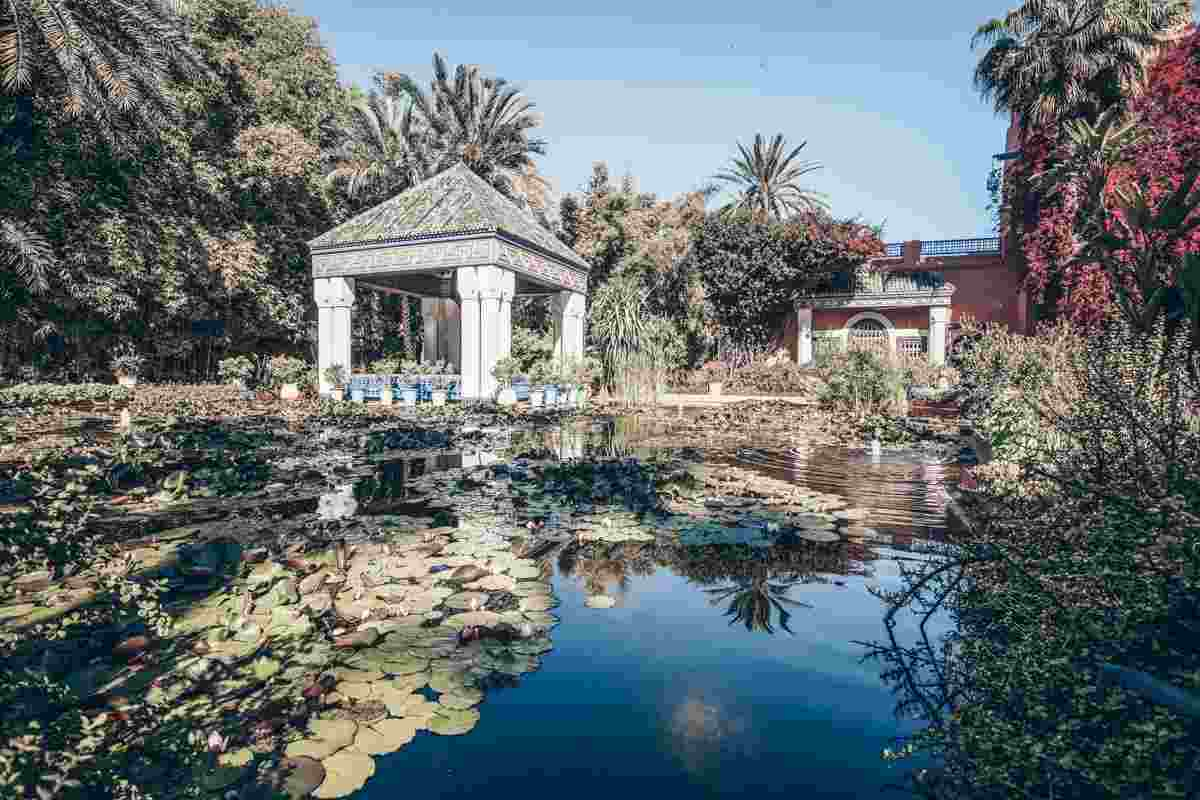 Marrakech. Lily-covered ponds and palm trees in the Majorelle Garden