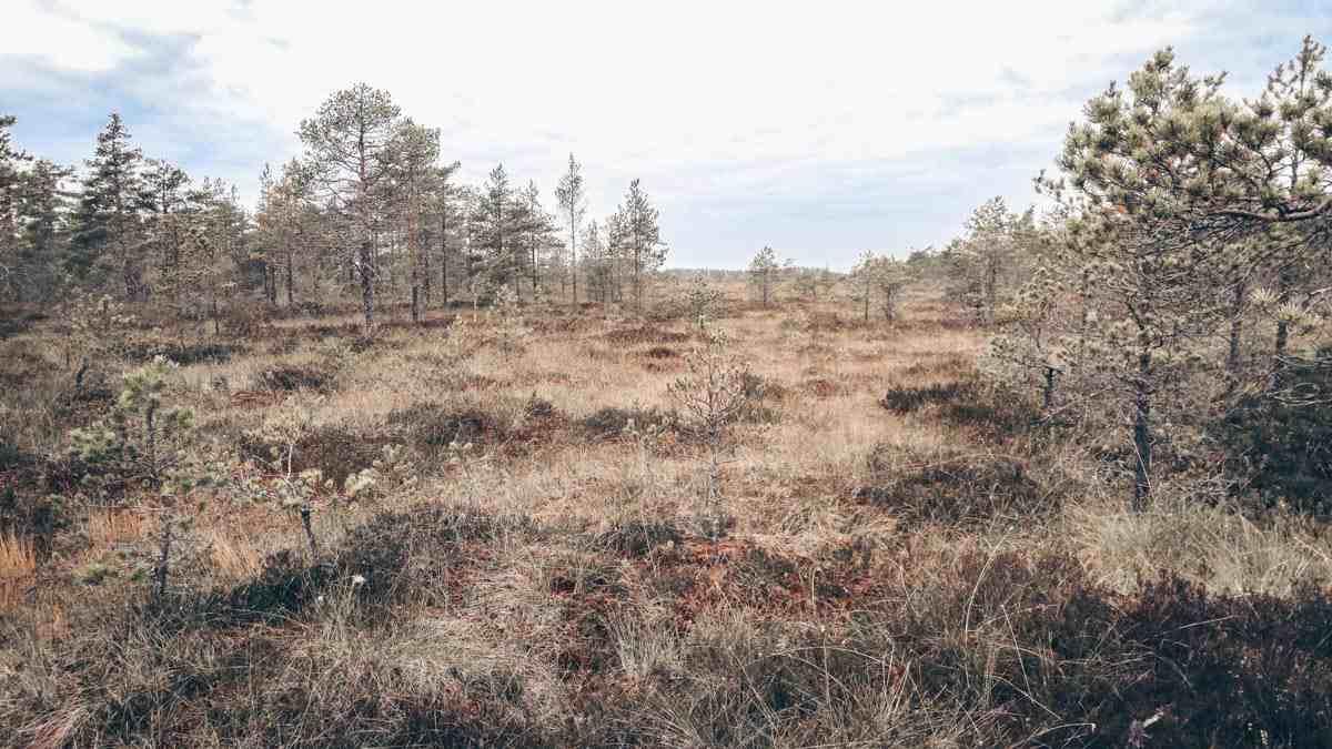 Finland National Parks: Beautiful wild landscape of Kurjenrahka National Park